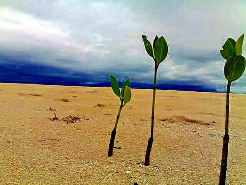 Hutan Mangrove Lebih Efisien Menyimpan Karbon - Hijauku ...