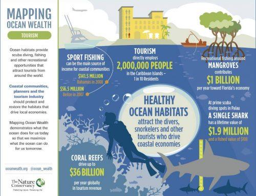 Potensi Wisata dari Laut yang Sehat