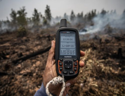 Palm Oil and Pulp Companies with Most Burned Land Go Unpunished