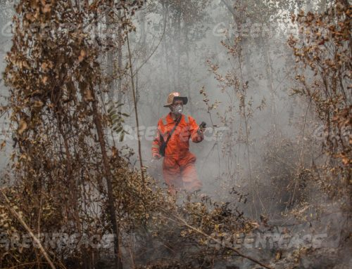 Top Companies Buying from Palm Oil Producers Linked to Fire Hotspots