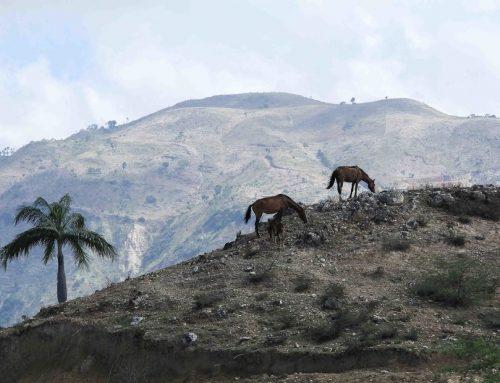Manusia Terus Rusak Hutan dan Lahan, Picu Bencana, Kepunahan
