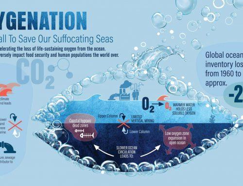 Kandungan Oksigen di Laut Terus Turun