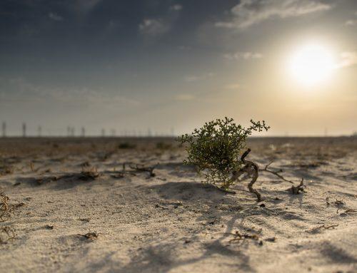 9 Pesan di Hari Lingkungan Hidup Dunia