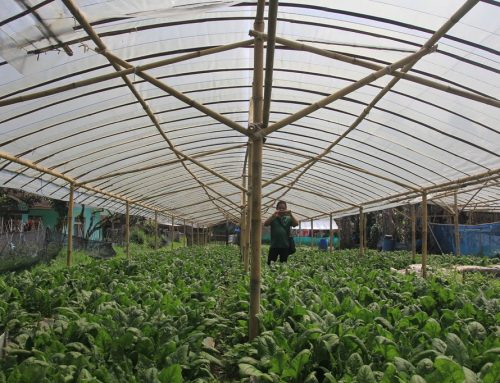 Menyejahterakan Petani Sambil Menangkap Karbon