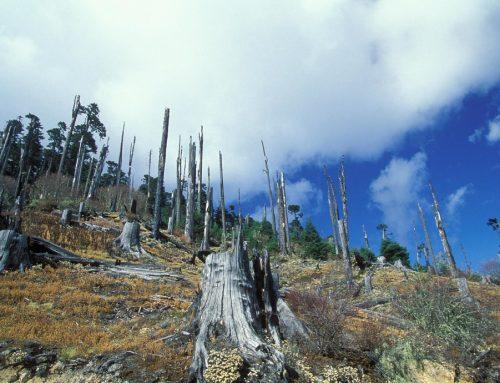 Lindungi Alam: Kunci Cegah Pandemi Berikutnya