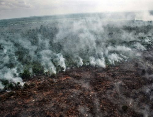 Indonesia: Area 8 Times of Bali Burned in Last 5 Years