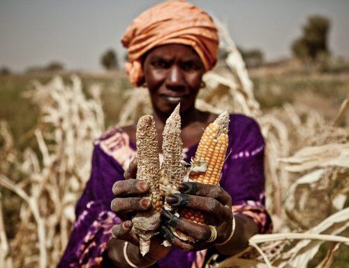 2 Miliar Penduduk Kelaparan di Hari Pangan