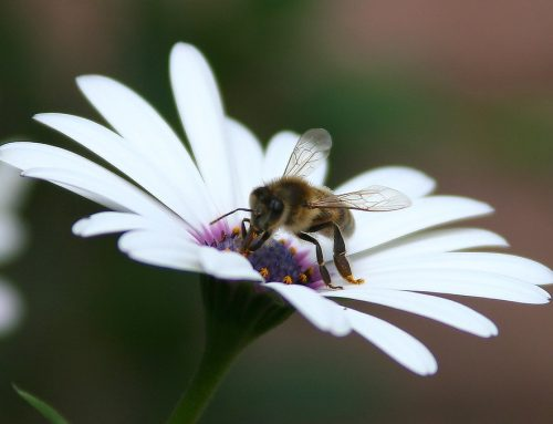 Tanpa Serangga Bumi Bisa Apa?