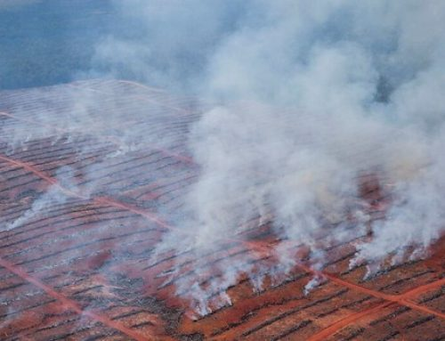 FSC-Certified Company Uses Fire to Clear Indonesian Forests