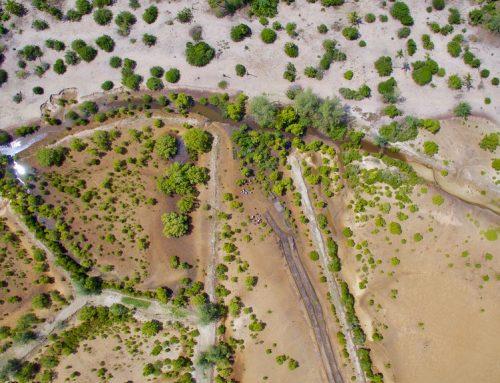 Melindungi Alam, Mencegah Krisis Iklim